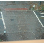 Street Crosswalk with White Lines - Roads